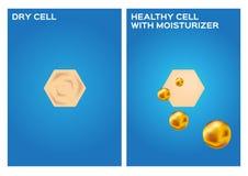 De vochtinbrengende crème maakt droge huid aan gezonde huid, 2 stappen Stock Afbeeldingen