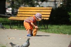 De voedende duiven van de jongen Stock Fotografie