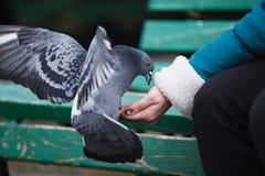 De voedende duiven van het meisje royalty-vrije stock afbeelding