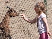 De voedende geit van het meisje Stock Fotografie