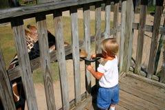 De voedende giraf van de jongen Stock Afbeeldingen