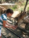 De voedende giraffen van het meisje Royalty-vrije Stock Afbeelding
