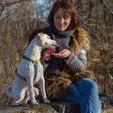 De voedende hond van de vrouw Stock Fotografie