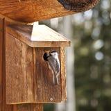 De voedende insecten van de vogel royalty-vrije stock foto