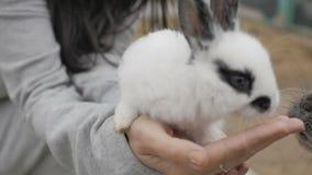 De voedende konijnen van de vrouw stock video