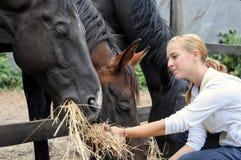 De voedende paarden van het meisje in het landbouwbedrijf Royalty-vrije Stock Foto