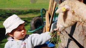 De voedende schapen van het meisje royalty-vrije stock foto