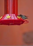 De voeder van de kolibrie Royalty-vrije Stock Foto