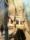 De voeder voor vogels en eekhoorns weegt op een boom in het de lente zonnige hol Close-up Vage achtergrond Voorraadfotografie stock foto's
