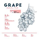 De voedingsfeiten van druif, hand trekken schetsvector stock illustratie