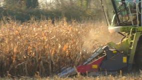 De voedselfabriek, Voedsel, cerea-Tractor dumpt tarwekorrels stock videobeelden