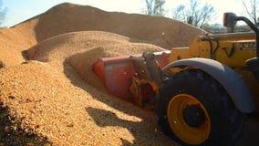 De voedselfabriek, Voedsel, graangewas-Tractor dumpt tarwekorrel stock footage