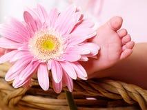 De voet van Babie Stock Foto's