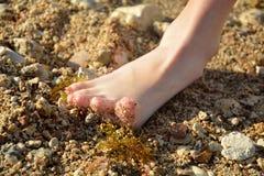 De voet van de baby Stock Foto's