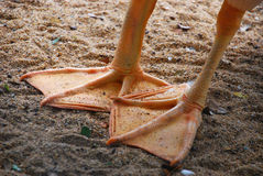 De voet van de eend stock afbeelding