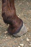 De voet van de ezel royalty-vrije stock afbeeldingen