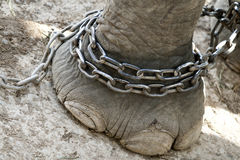 De voet van de olifant Royalty-vrije Stock Afbeeldingen