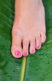 De voet van de vrouw in schoonheidsbehandeling Stock Foto