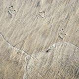 De voet van de zeemeeuw in het zand Stock Afbeelding