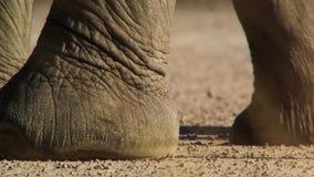 De voet van een olifant met heel wat textuur en details stock foto's