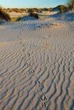 De voetaf:drukken van de vogel in het zand Stock Foto's