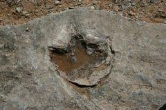 De voetafdruk van de dinosaurus stock fotografie