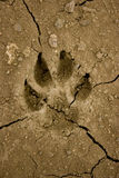 De voetafdruk van de hond Royalty-vrije Stock Afbeelding