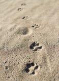 De voetafdruk van de hond Stock Foto's