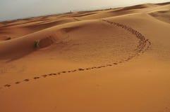 De voetafdruk van de kameel op de duinen in de woestijn Stock Foto