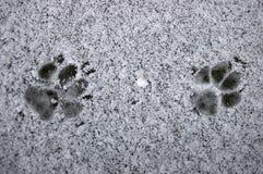 De voetafdruk van de vos Royalty-vrije Stock Afbeelding