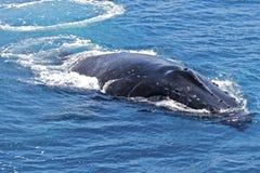 De voetafdruk van de walvis Stock Foto