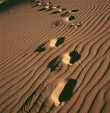 De Voetafdruk van de woestijn Royalty-vrije Stock Afbeeldingen