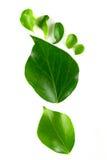 De voetafdruk van Eco die van bladeren wordt gemaakt Stock Afbeeldingen