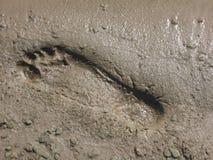 De voetafdruk van het strand Stock Foto