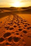 De voetafdrukken erachter verlaten na dromedarispassage over de woestijnduinen van de ERG van Marokko ` s Royalty-vrije Stock Afbeeldingen