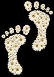 De voetafdrukken van Daisy Royalty-vrije Stock Afbeeldingen