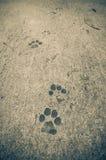 De voetafdrukken van de hond Royalty-vrije Stock Foto's