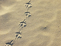De voetafdrukken van de vogel in het zand Stock Foto