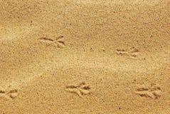 De voetafdrukken van de vogel in het zand royalty-vrije stock afbeelding