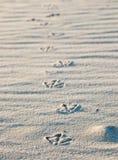 De voetafdrukken van de vogel in zand Stock Afbeeldingen