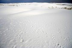 De Voetafdrukken van de woestijn Stock Fotografie