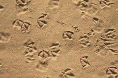 De voetafdrukken van de zeemeeuw en van duiven Royalty-vrije Stock Afbeeldingen