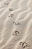 De voetafdrukken van de zeemeeuw in het zand Stock Fotografie