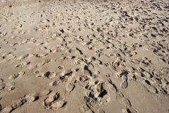 De Voetafdrukken van het zand Royalty-vrije Stock Foto's