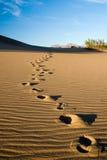De Voetafdrukken van het zand stock foto's