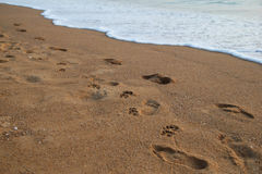 De voetafdrukken van volkeren en honden op het zandstrand dichtbij aan overzees Stock Afbeelding