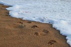 De voetafdrukken van volkeren en honden op het zandstrand dichtbij aan overzees Stock Fotografie