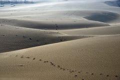 De voetafdrukken zijn op het zandige strand Stock Foto's