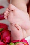 De voeten en de rozen van de baby stock afbeelding