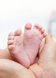 De voeten van de baby in moederhanden Nieuw - geboren Jong geitjevoet Stock Afbeelding